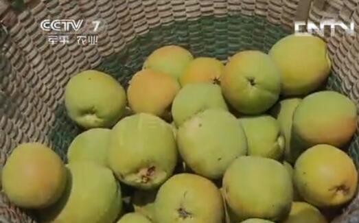 木瓜种植一亩地的利润是多少