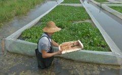 <b>网箱养殖水蛭的亩产效益是多少</b>
