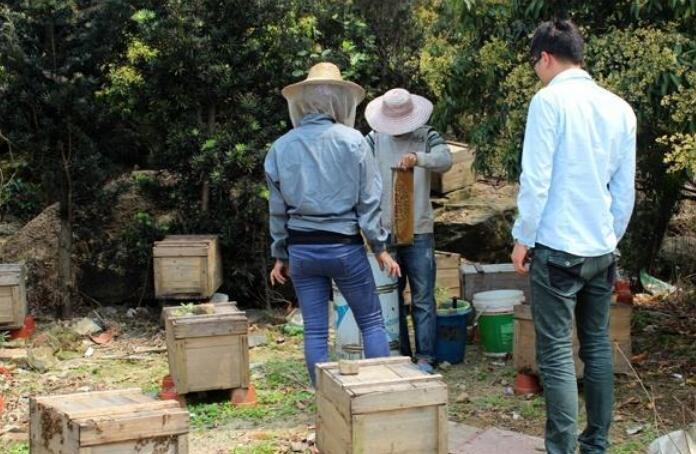 怎么给蜜蜂喂糖?蜂群喂糖水的正确方法
